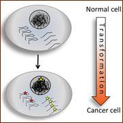 """לעריכת רנ""""א תפקיד חשוב בהתפתחות הגידול הסרטני"""