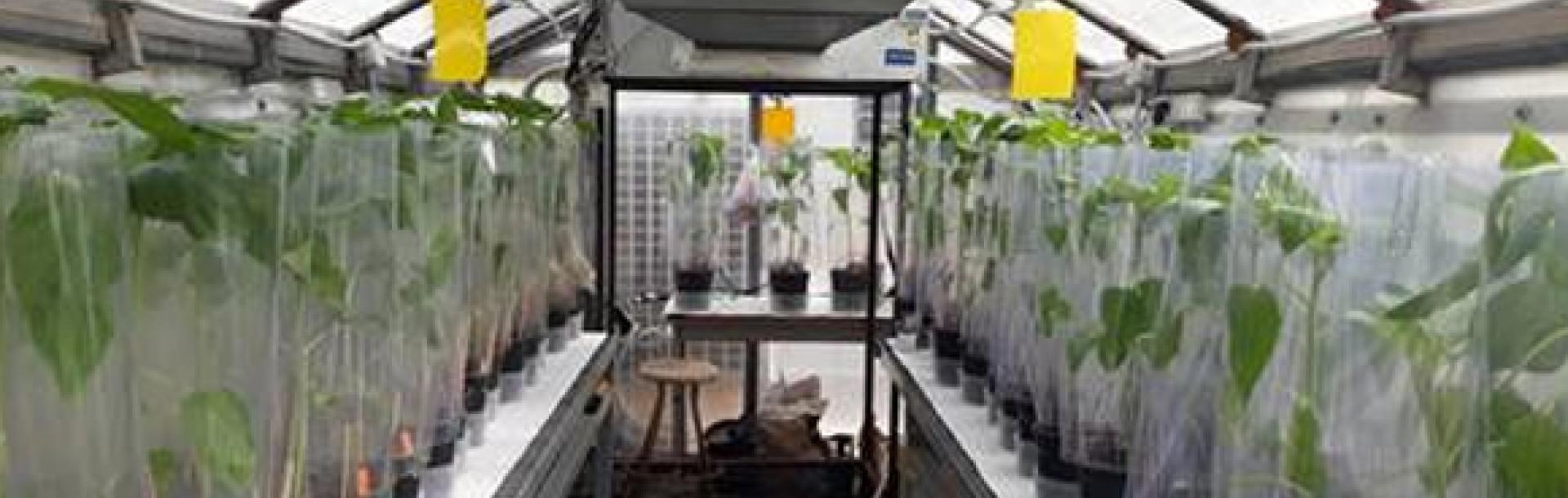 על צמחים ומתכות כבדות