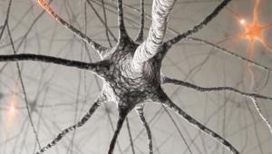 סמינר במדעי המוח