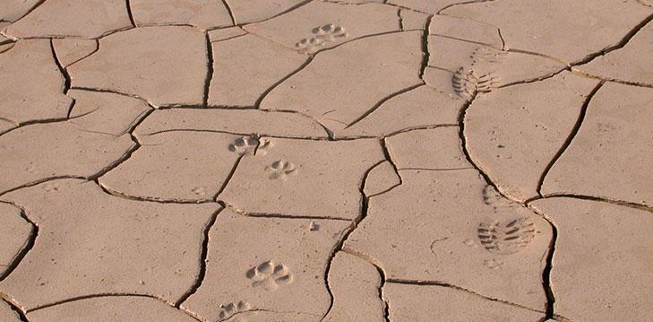 להבין איך סלע נשבר
